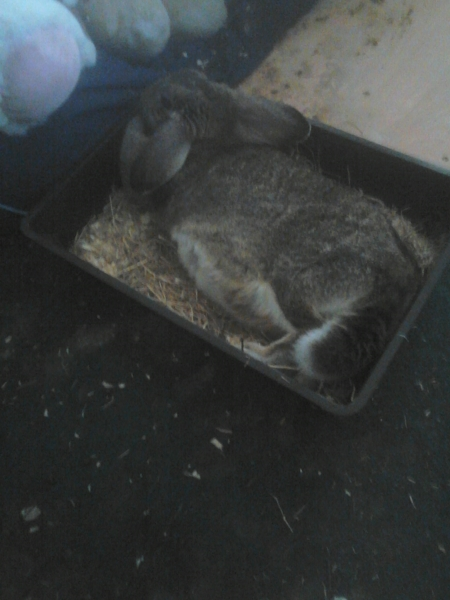 Maddy chilling in her litter tray.