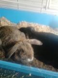 With her sister Flopsy