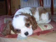 Lucky around 8 weeks old. This was taken a few days after collecting him